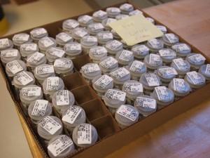 写真2 CHN分析と炭酸カルシウム測定に用いる試料。こちらは各セクションにあるので結構な数の試料数になります。今写っているだけでも、一部です。たくさんあります!